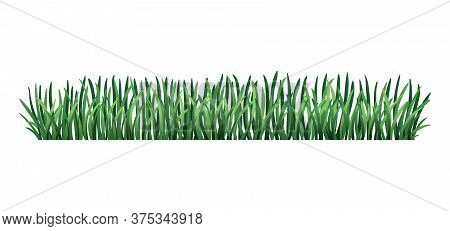 Green Grass Border. Fresh Green Grass. Isolated On Transparent Background. Vector Illustration For U