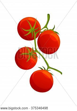 Chery Tomato. Fresh Healthy Red Tomato Made In Flat Style. Vegetarian Food. Vegetable From The Farm.