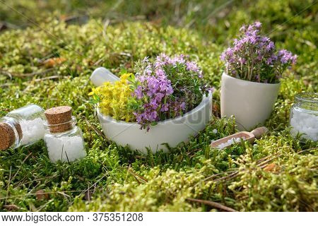 Bottles Of Homeopathic Globules, Mortars Of Medicinal Herbs On A Green Moss In Forest Outdoors.