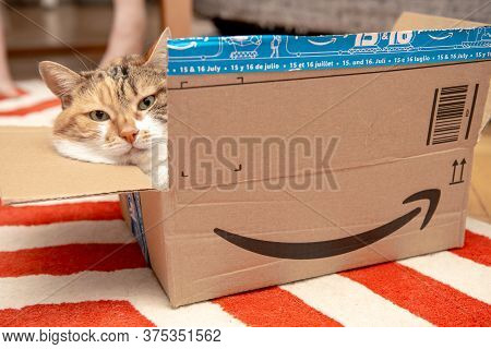 Paris, France - Aug 19, 2019: Serious Cat With Funny Look Resting Inside Cardboard Parcel Box Of Ama