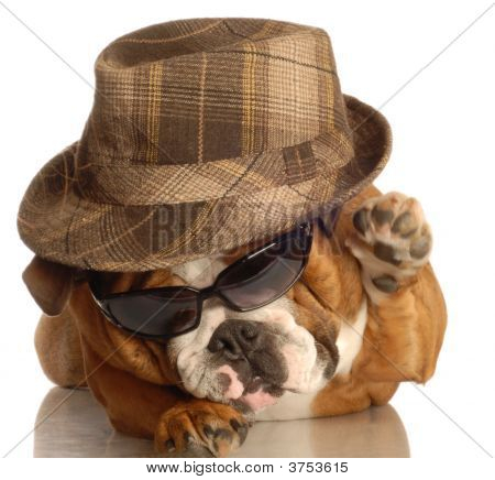 Bulldog Dressed Up Like A Gangster
