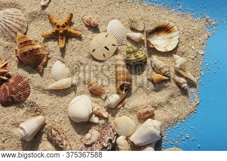 Sea Shells On Boardwalk With Sand And Bright Sun