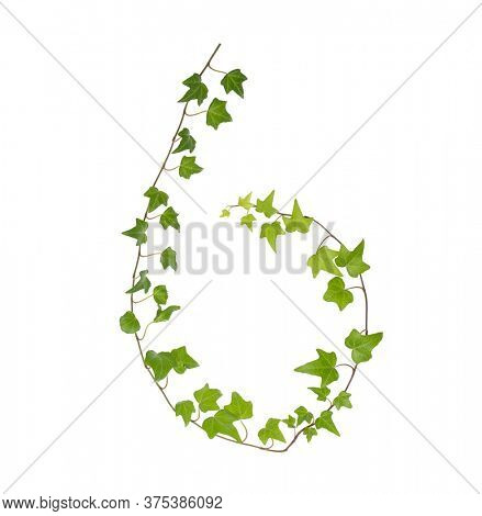 sprig of ivy on a white surface