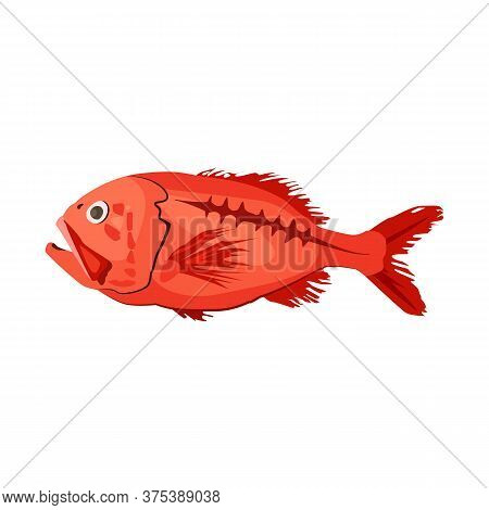 Red Sea Perch. Orange Roughy. Can Be Used For Topics Like Deep Sea Fish, Fishing, Seafood