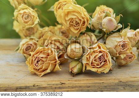 Dry Roses Dead Flowers Concept. Transience Of Youth And Beauty.