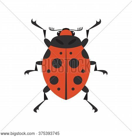 Cartoon Ladybug Vector Flat Illustration. Insect On A White Isolated Background. Funny Red Bug With