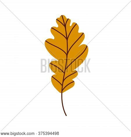 Oak Leaf Isolated On A White Background. Fallen Yellow Oak Leaf. Flat Vector Illustration