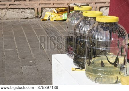 Hirudotherapy. Leech In A Can Of Plastic Water. Alternative Medicine Is Used In Treatment. Outside