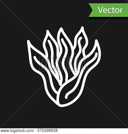 White Line Seaweed Icon Isolated On Black Background. Underwater Seaweed Spirulina, Aquatic Marine A