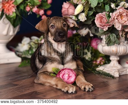 Cute Puppy Lying On The Floor With Flowers