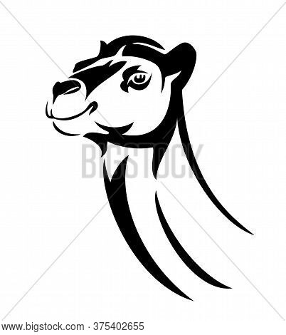 Arabian Camel Black And White Vector Head Portrait Outline