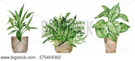 Watercolor Home Potted Plants. Boston Fern, Cast Iron Plant And Dieffernbachia. Modern And Elegant H