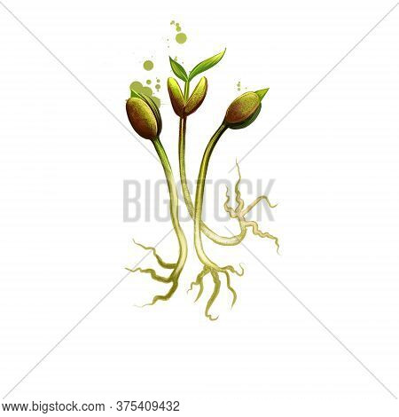 Bean Sprouts Isolated On White Background. Digital Art Illustration Of Bean Sprout Ingredient, Made