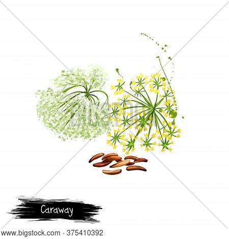Digital Art Caraway, Meridian Fennel Or Persian Cumin Isolated On White Background. Organic Healthy