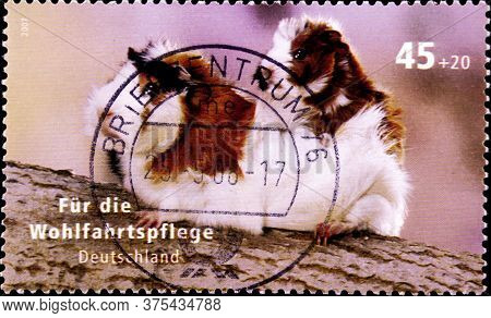 02 08 2020 Divnoe Stavropol Territory Russia The Germany Postage Stamp 2007 Welfare For Pets Guinea
