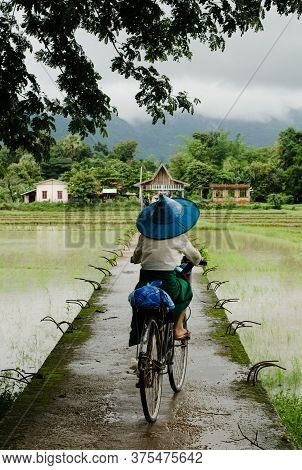 Hpa An, Myanmar - 13 Jun 2014: A Woman Rides A Bicycle Across The Paddy Fields, Around Hpa An Town I