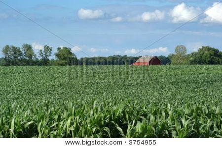 Farmers Field And Barn
