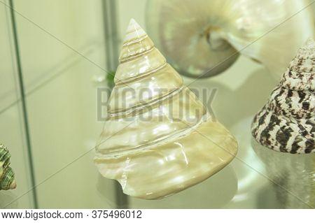 Set Of Sea Shells On Glass Surface