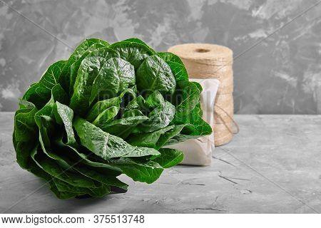 Lettuce Or Romano Salad, Salad Leaves Lettuce Bush, Green Crop Petals, Vitamins Roman Salad, Batavia