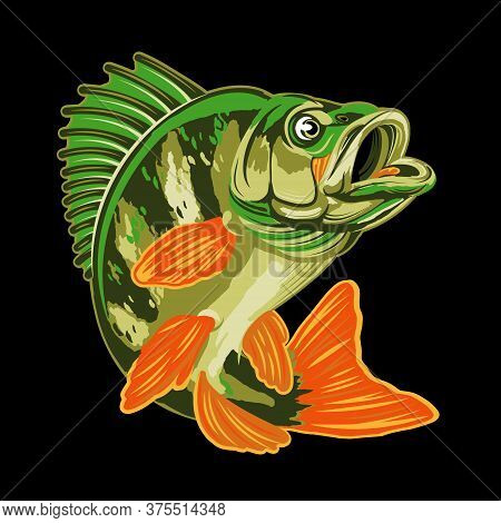 Eurasian River Yellow Perch Fish.bass Fishing Logo Isolated On Black Background.
