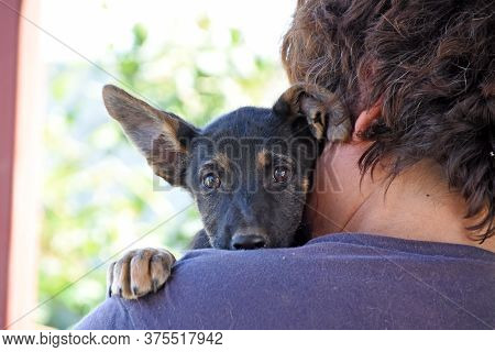 Little Cute Puppy On A Man Shoulder. Puppy Portrait