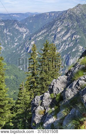 Wild High Mountains Spruce Forest In Durmitor National Park Montenegro.