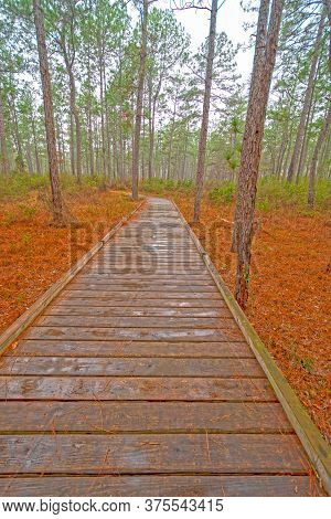 Boardwalk Through A Wetland Forest On A Rainy Day In Big Thicket National Preserve In Texas