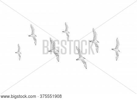 Vector Hand Drawn Doodle Sketch Flying Seagull Birds Flock Isolated On White Background