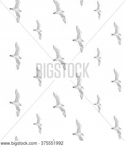 Vector Seamless Pattern Of Hand Drawn Doodle Sketch Seagull Birds Flock Isolated On White Background