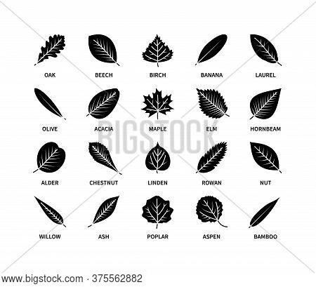 Useful Leaves Silhouette Icons Vegan Analysis Vector Set. Design Line Elements Leaf Tree Bush Berrie