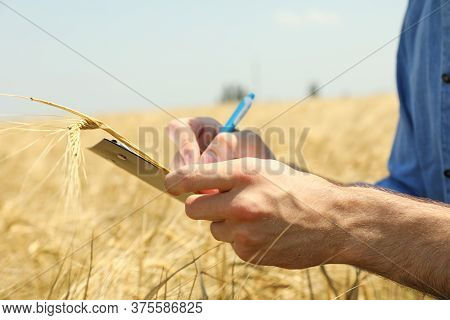 Young Man With Clipboard In Barley Field. Agriculture Business. Farming