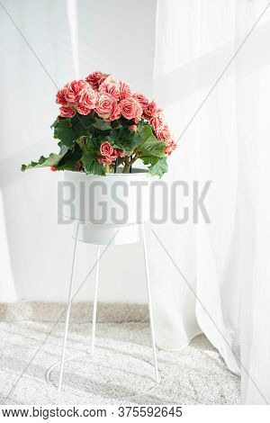 Roses are essential for decoration. It provides beauty to occasion.