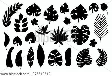 Vector Set Of Black Silhouette Tropical Leaves. Monstera, Banana, Palm Leaf Isolated On White Backgr