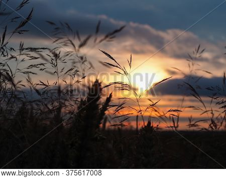 Sunlight Through The Clouds At Sunse In The Shade Of Blades Of Grass