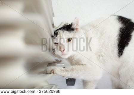 The Cat Is Warming Near The Battery, A Mobile Heater Moldova, Bender, July 5, 2020, Bender Fortress,