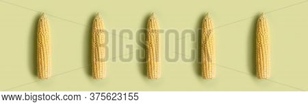 Horizontal Picture With Corn Cob Pattern At Solid Soft Green Background. Web Banner For Site With Co