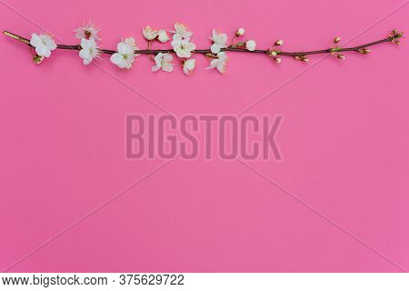 Photo Of Spring White Cherry Blossom Tree On Pink Background. View From Above, Flat Lay, Copy Space.