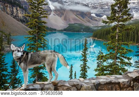 Traveling with a dog.  Dog on lake shore in beautiful Moraine lake, Canada, Banff National Park