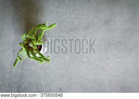Small Decorative Cactus On Grey Desk In Modern Interior