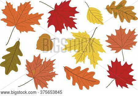 Vector Illustration, Set Of Bright Realistic Autumn Leaves. Fall Leaves Background. Maple, Linden, O