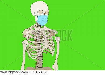 Human Jaw White Teeth Open Mouth Illustration