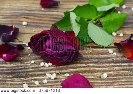 A Wilted Rose On A Wooden Background, An Old Flower