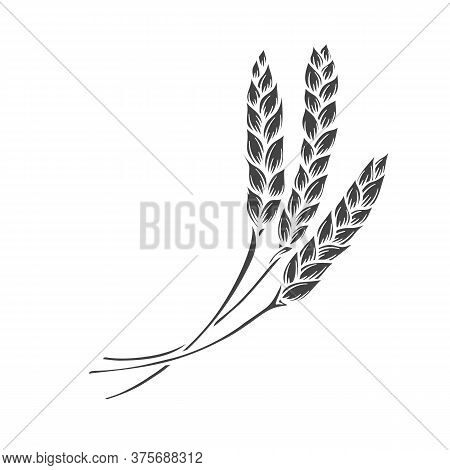 Rye Or Wheat Spikelets Glyph Icon. Vector Illustration Cereals For Design Of Baking And Bread Produc