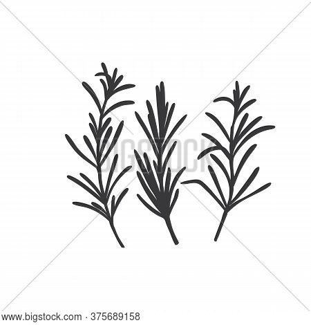 Rosemary Silhouette Icon. Culinary Herbs. Monochrome Condiment Vector Illustration.