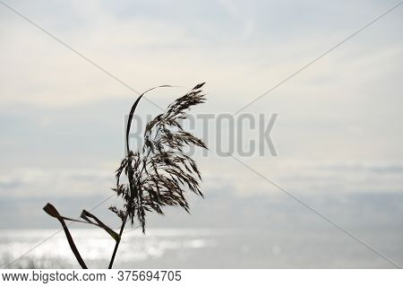 Background Landscape Of Grass Blade On A Background Of Water And Horizon