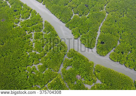 Mangrove forest and rivers at Phang Nga bay, Thailand