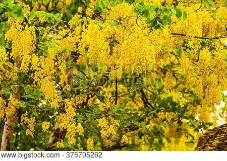 Beautiful Yellow Cassia Fistula(golden Shower Tree) Blossom Blooming On Tree At Park In On Blue Sky