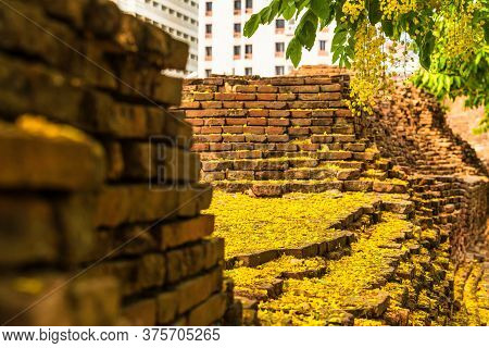 Beautiful Yellow Cassia Fistula(golden Shower Tree) Blossom Blooming On Tree Around The Wall Of Moat
