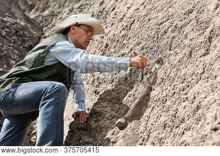 Paleontologist Extracts Fossil Bone From A Rock By Cleaning It With A Brush