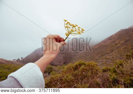 Beautiful Female Hand Holding A Torn Flower On A Cloudy Gray Background On Nature